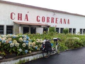 Chá Gorreana - Pedalaçores